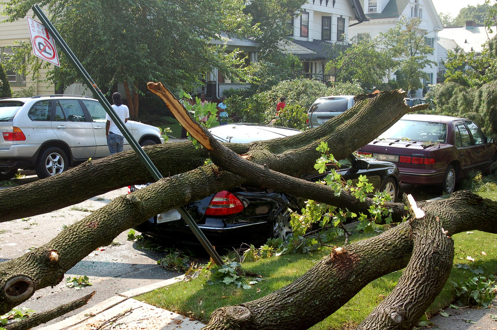 A parked sedan crushed by a tree